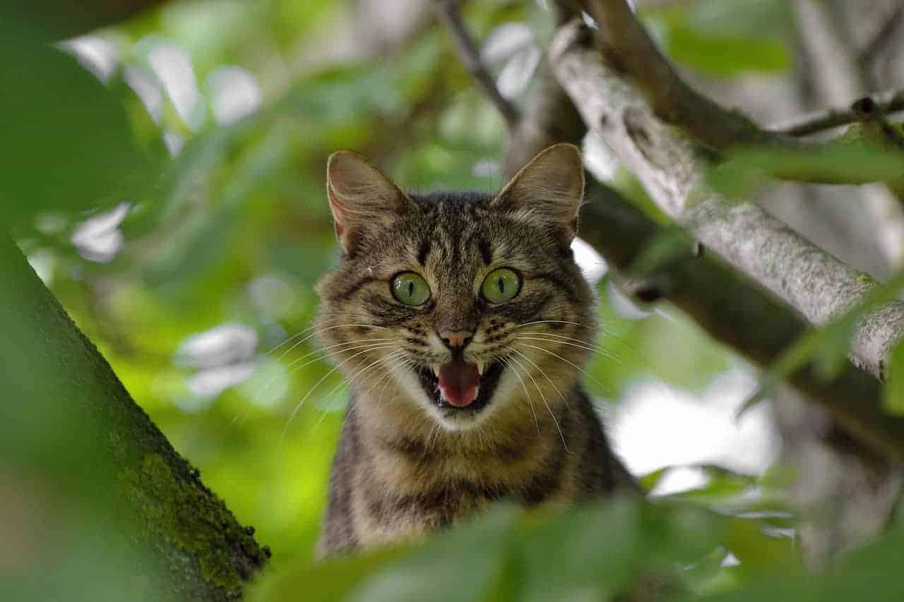 cat 1641959 1280 - Überraschung